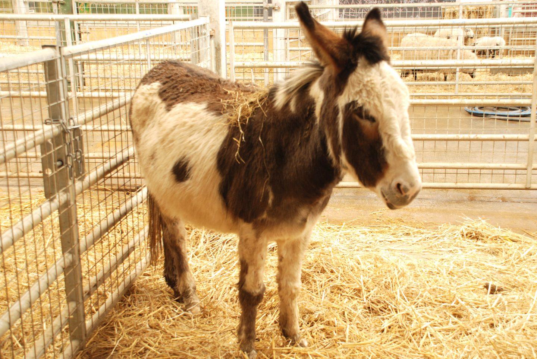 Donkey at Folly Farm adventure park and zoo