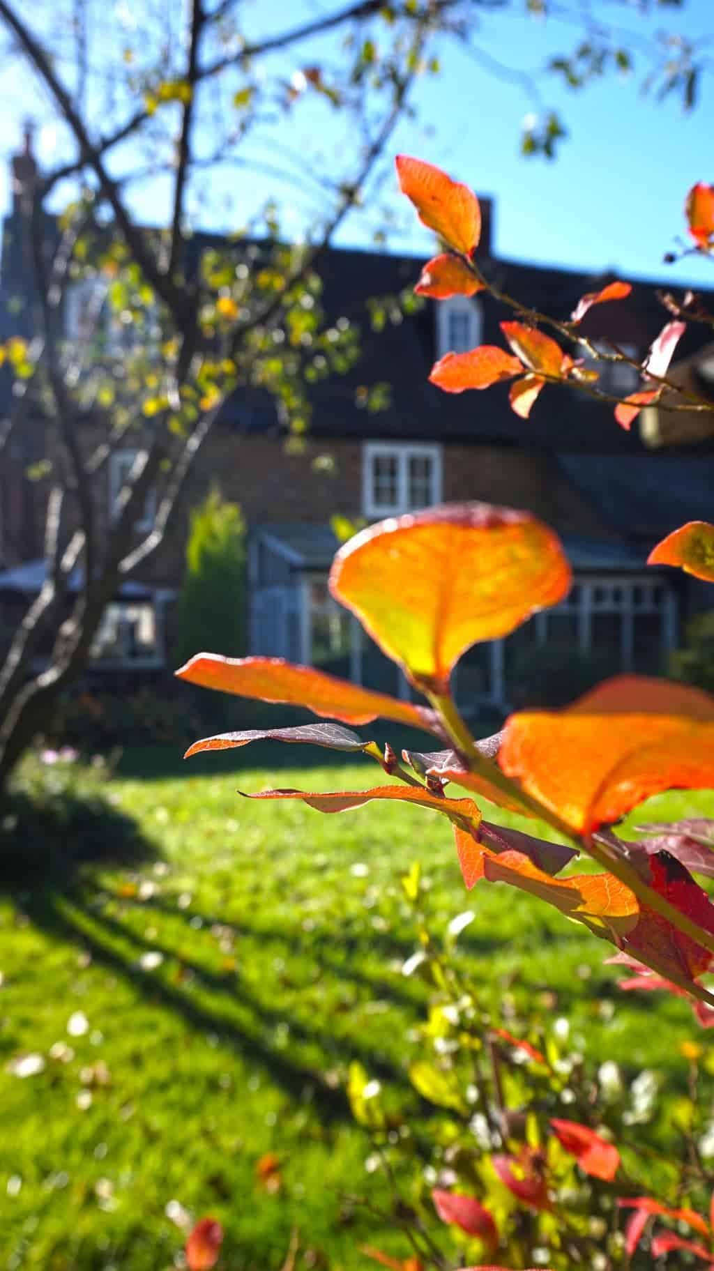 autumn-garden-blueberry
