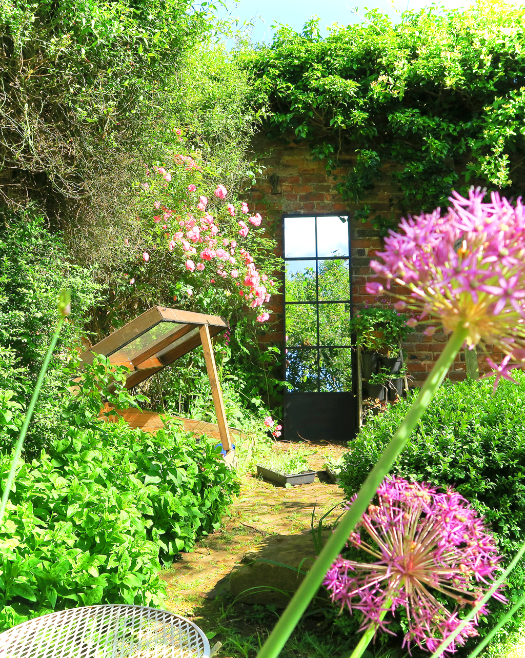 Our Walled Cottage Garden In The Summer Is Filled With Alliums And Roses.