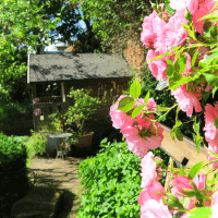 The roses in our walled cottage garden really come into their own during the summer.