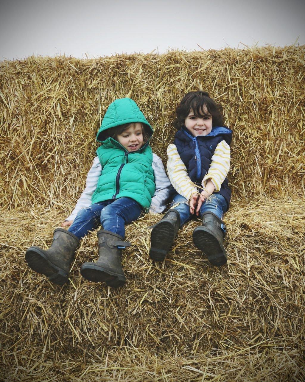 Pumpkin Picking in Staffordshire | Free range family fun at Bednall Pumpkin Farm