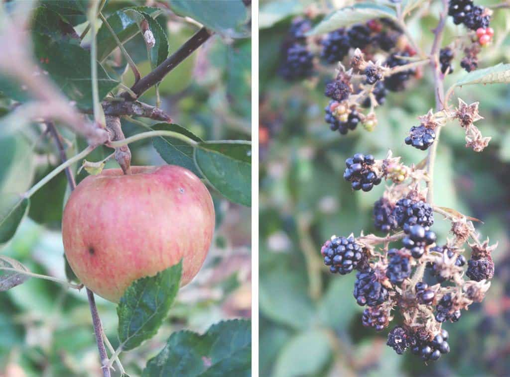 Plastic Free For a Week {Family Sustainability Challenge} - apples and blackberrys