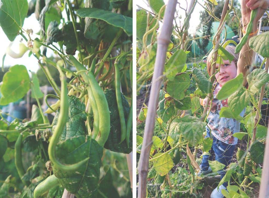 Going Plastic Free For a WeekFamily Sustainability Challenge - Bean picking