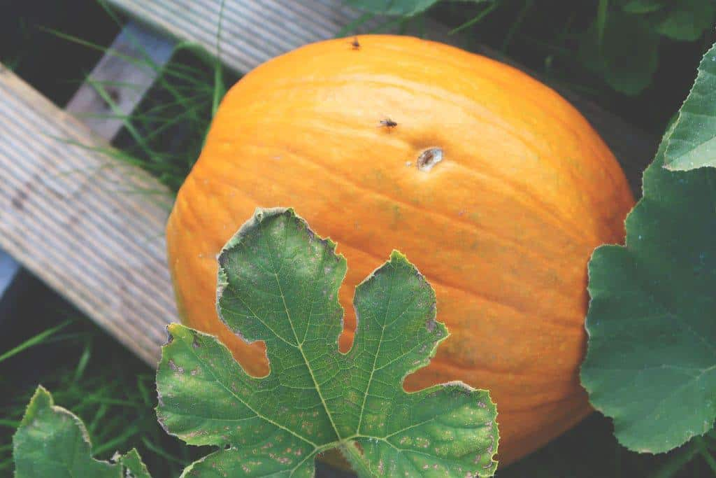 Going Plastic Free For a Week {The Sustainability Challenge} - pumpkins