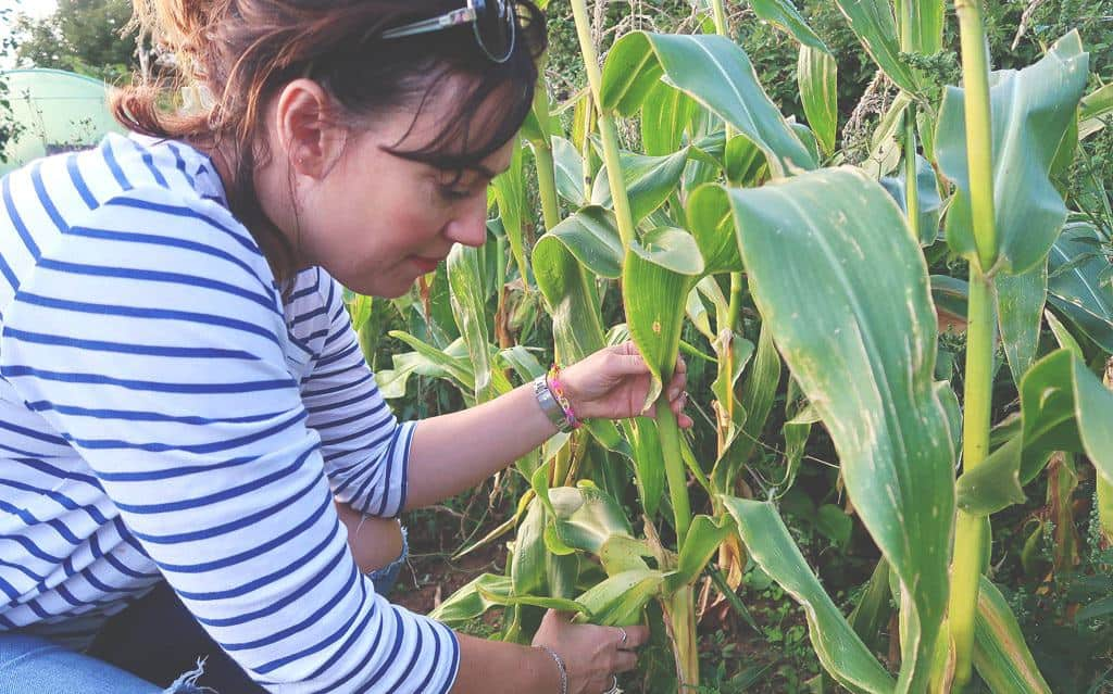 Going Plastic Free For a Week {The Sustainability Challenge} - checking the sweetcorn