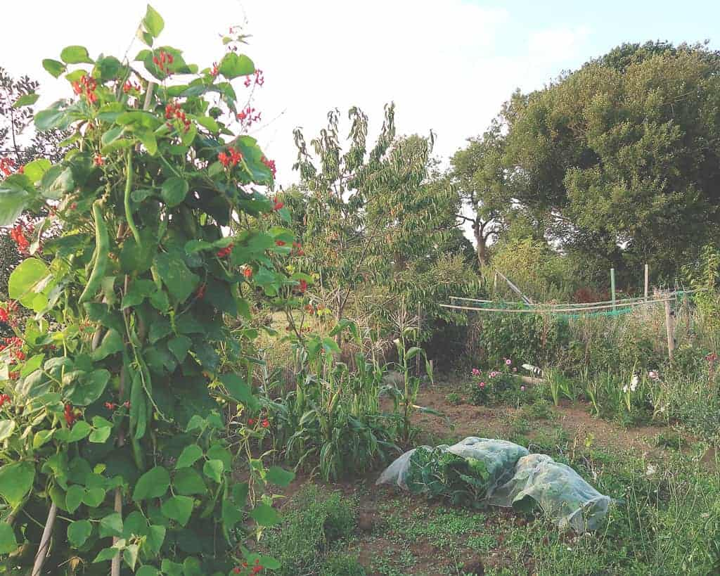Plastic Free For a Week {Family Sustainability Challenge} — our allotment