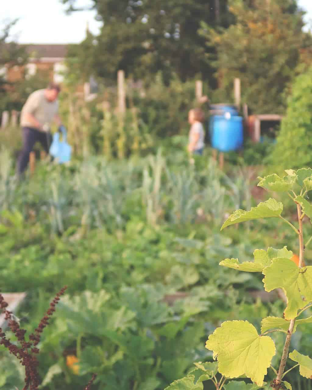 Family Sustainability Challenge — on the allotment